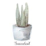 Ręki malować akwarela sukulentu rośliny w garnku Doskonalić dla kart, etykietek, zaproszeń, sieci, scrapbook, ulotki, etc Obrazy Stock