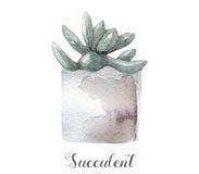 Ręki malować akwarela sukulentu rośliny w garnku Doskonalić dla kart, etykietek, zaproszeń, sieci, scrapbook, ulotki, etc Obrazy Royalty Free