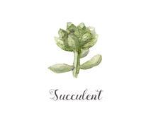 Ręki malować akwarela sukulentu rośliny w garnku Doskonalić dla kart, etykietek, zaproszeń, sieci, scrapbook, ulotki, etc Obraz Royalty Free