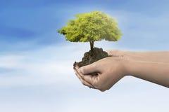 Ręki mienia drzewna roślina na ziemi obrazy stock