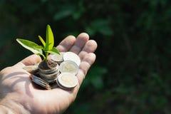 Ręki mienia monety z rośliną na odgórnym ten pojęcie ja dla biznesu fotografia stock