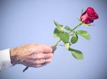 ręki mienia samiec wzrastać czerwień wzrastał Obrazy Royalty Free