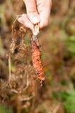 Ręki mienie uszkadzająca marchewka illnesses zdjęcie royalty free