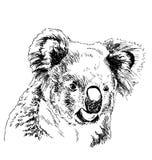Ręki nakreślenia głowy koala Obrazy Royalty Free