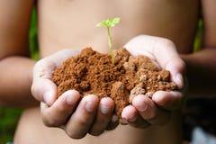 ręki narastający drzewo Obraz Stock