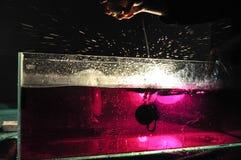 Ręki opuszcza cytrynę w różowią wodę w zbiorniku wodnym obraz stock