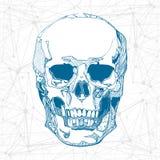 ręki patroszona czaszka również zwrócić corel ilustracji wektora Zdjęcie Royalty Free