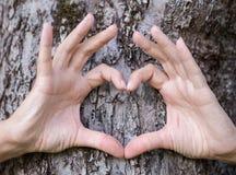 Ręki przedstawienia miłości symbol przed drzewem zdjęcie royalty free