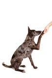 ręki psia daje łapa zdjęcia royalty free