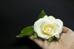 ręki róży biel Obrazy Royalty Free
