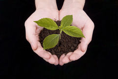 ręki roślina Obrazy Stock