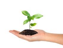 ręki roślina Obraz Royalty Free