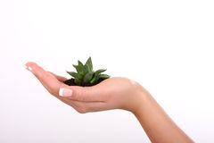 ręki roślina royalty ilustracja