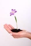 ręki roślina ilustracji