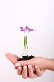 ręki roślina ilustracja wektor