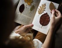 Ręki Robi Suszącej kwiat kolekci w Książkowej Handmade pracie Hobb Obrazy Stock