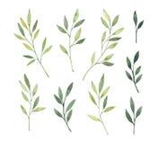 Ręki rysować akwareli ilustracje Botaniczny clipart Set g royalty ilustracja