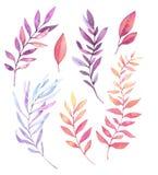 Ręki rysować akwareli ilustracje Botaniczny clipart Set p ilustracja wektor