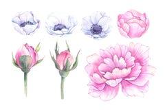 Ręki rysować akwareli ilustracje Wiosna liście, anemony i ilustracja wektor