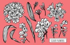 Ręki rysować kwieciste dekoracje ilustracja wektor