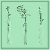 Ręki rysować lawend rośliny, kwiaty w Vitro, buteleczka, w ramie royalty ilustracja