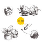 Ręki rysować nakreślenie stylu jagody ustawiać na białym tle Malinka, truskawka, wiśnia i czarna jagoda, ilustracja wektor