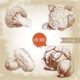 Ręki rysować nakreślenie stylu kapusty ustawiać Kapust głowy, kalafior, brokuły i chińskiej kapusty Tsai składy, Organicznie fres ilustracja wektor