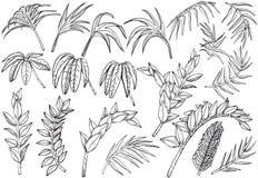 Ręki rysować Tropikalne palmowe dżungli rośliny ustawiać royalty ilustracja
