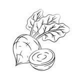 Ręki rysujący beetroot nakreślenia Zdjęcie Royalty Free