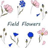 Ręki rysujący cornflowers i kosmos szczotkarski węgiel drzewny rysunek rysujący ręki ilustracyjny ilustrator jak spojrzenie robi  ilustracji