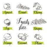 Ręki rysujący nakreślenie stylu owoc, dokrętki i jagody, ilustracji