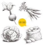 Ręki rysujący nakreślenie stylu warzywa ustawiający Kapusta, buraka korzeń z liśćmi, worek z grulami i wiązka marchewka, ilustracji