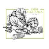 Ręki rysujący rolni warzywa Chińska kapusta, karczoch, kukurydzany cob, marchewka, rzodkiew Wektor grawerująca ilustracja rolnicy royalty ilustracja