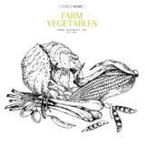 Ręki rysujący rolni warzywa Kapusta, oliwka, kiełkuje cebuli, kukurudza, grochy Wektor grawerująca ilustracja Rolnika rynek ilustracja wektor