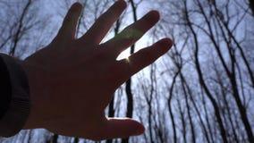 ręki słońce Sylwetka, słońce promienie i las na tle, 4K UltraHD, UHD zdjęcie wideo
