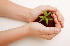 ręki target1566_1_ rośliny błocą niektóre Zdjęcia Stock