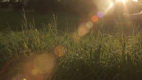 Ręki trawy wieczór słońca obiektywu Wzruszający raca zbiory
