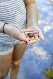 Ręki Trzyma żaby Zdjęcie Stock