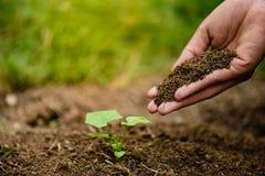 Ręki trzyma glebowymi zasadzać młodego drzewa Zdjęcia Royalty Free