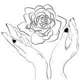 Ręki trzyma róża kwiat odizolowywającego kontur Zdjęcia Stock