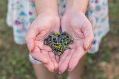 Ręki trzyma słonecznikowych ziarna w polu Fotografia Royalty Free