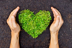 Ręki trzyma zielonego serca kształtnego drzewa Obrazy Royalty Free