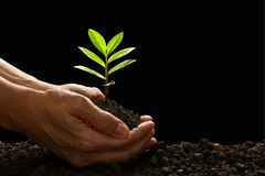 Ręki trzyma zielonej młodej rośliny i dba Zdjęcie Stock