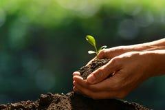 Ręki trzyma zielonej młodej rośliny w naturze i dba Fotografia Stock
