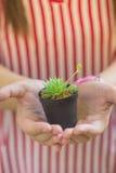 Ręki trzyma zielonej małej rośliny Obrazy Stock