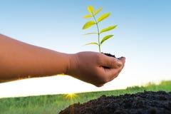 Ręki trzyma zielonej rośliny Obrazy Stock