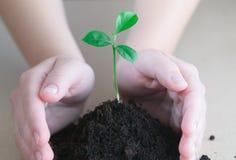 Ręki trzyma zielonej rośliny Fotografia Royalty Free