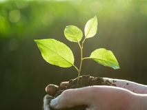 Ręki trzyma zielonej rośliny Zdjęcia Stock