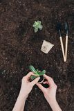 Ręki trzyma zielonej rośliny i kwiatu garnka above ziemię z ogrodnictw narzędziami Zdjęcia Royalty Free