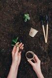 Ręki trzyma zielonej rośliny i kwiatu garnka above ziemię z ogrodnictw narzędziami Obraz Royalty Free